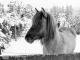 Scheuren-Winter-20210110_164536